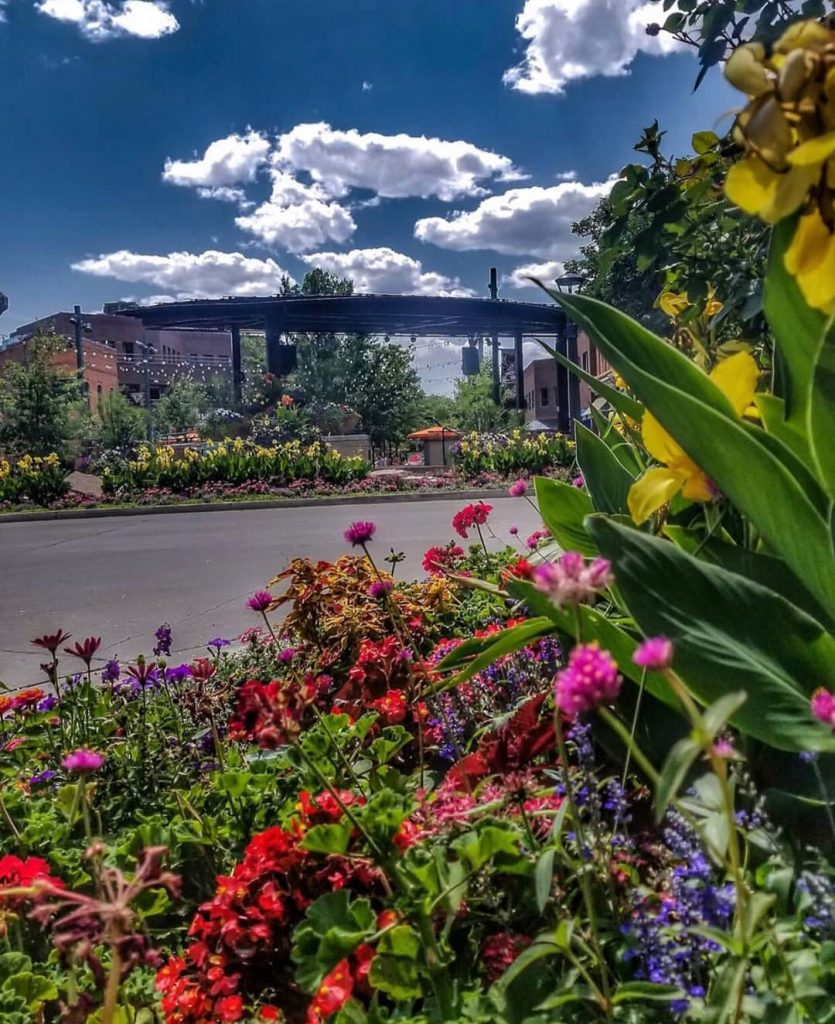photo of the Poudre River and Flowers in Fort Collins Colorado
